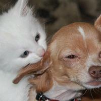 犬派と猫派、実際に多いのはどっち?